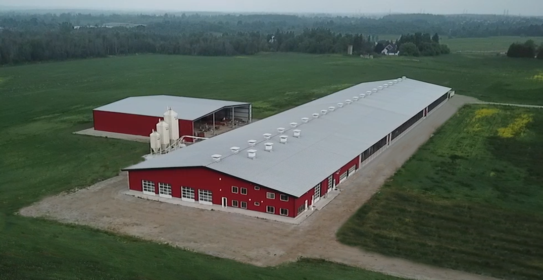 Take a tour of the largest sheep dairy farm in Canada near Toronto