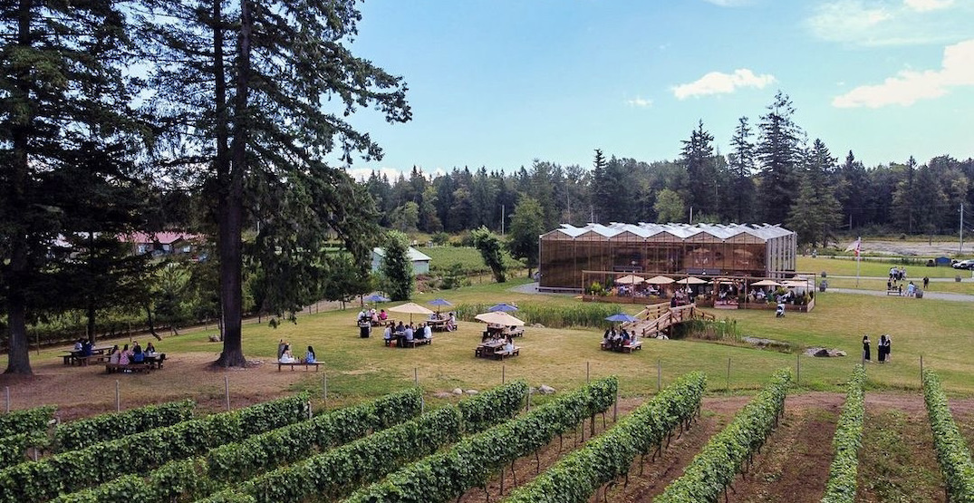 Wineries in and around Vancouver to visit this season