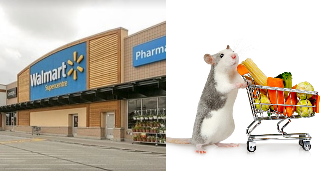 Walmart in New West forced to close food aisles overrun by hungry rodents