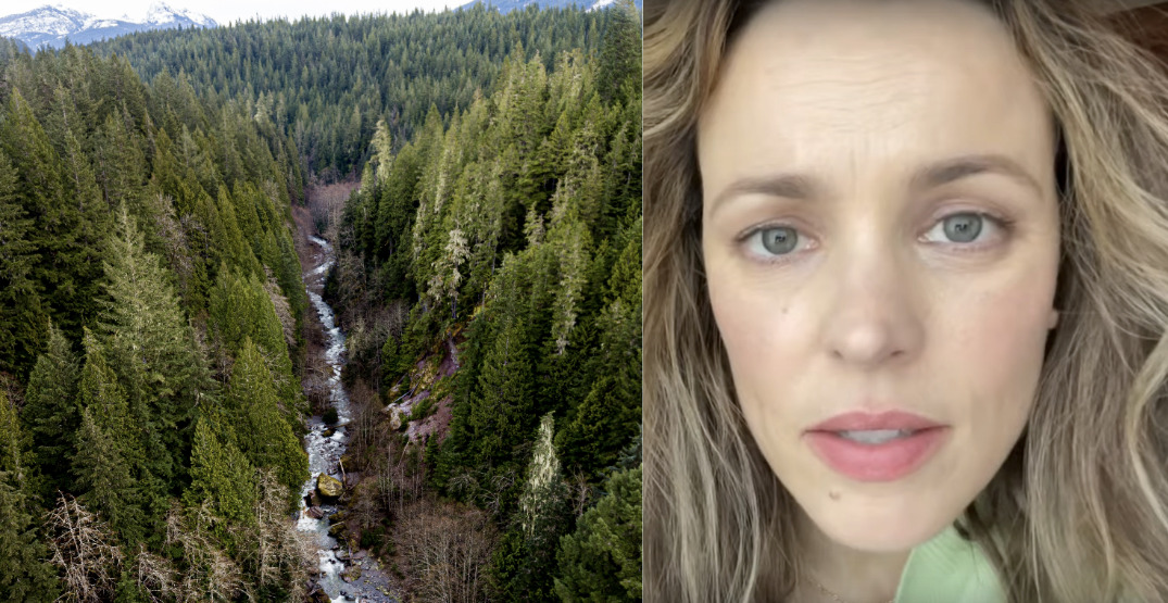 Rachel McAdams becomes latest celebrity advocating for old growth forests