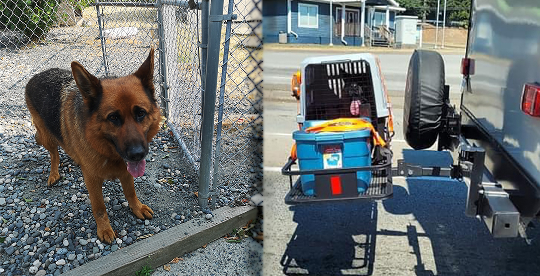 BC SPCA recommending animal cruelty charges after dog in crate strapped to RV
