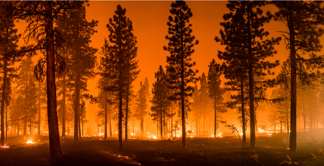 """""""Never been more concerned"""": former wildfire service spokesperson says of next 36 hours"""