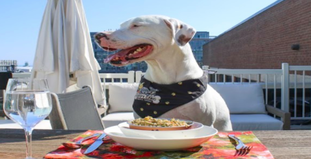 Toronto patio now offering dog menus for your pups