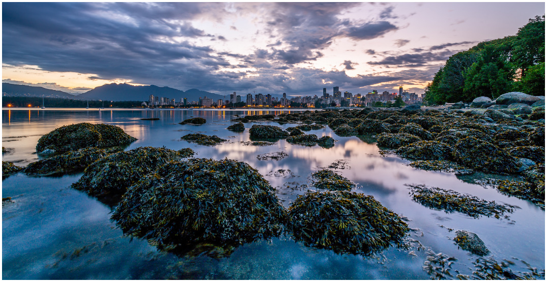 Over one billion sea creatures dead on BC shores due to extreme heat