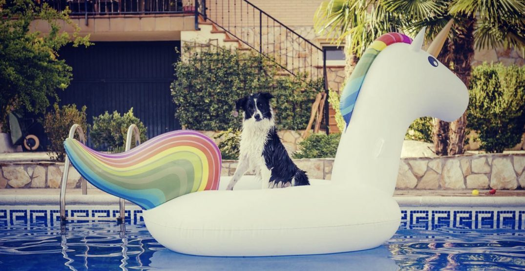 Bring your dog to a 120-foot pool party in downtown Calgary this month