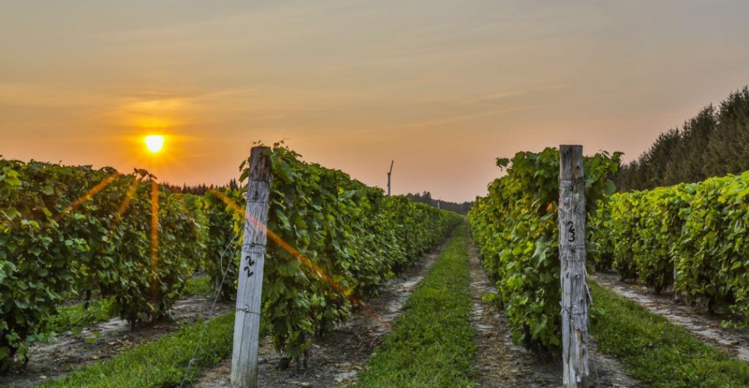 Gorgeous $2.5 million 13-acre Quebec winery for sale (PHOTOS)