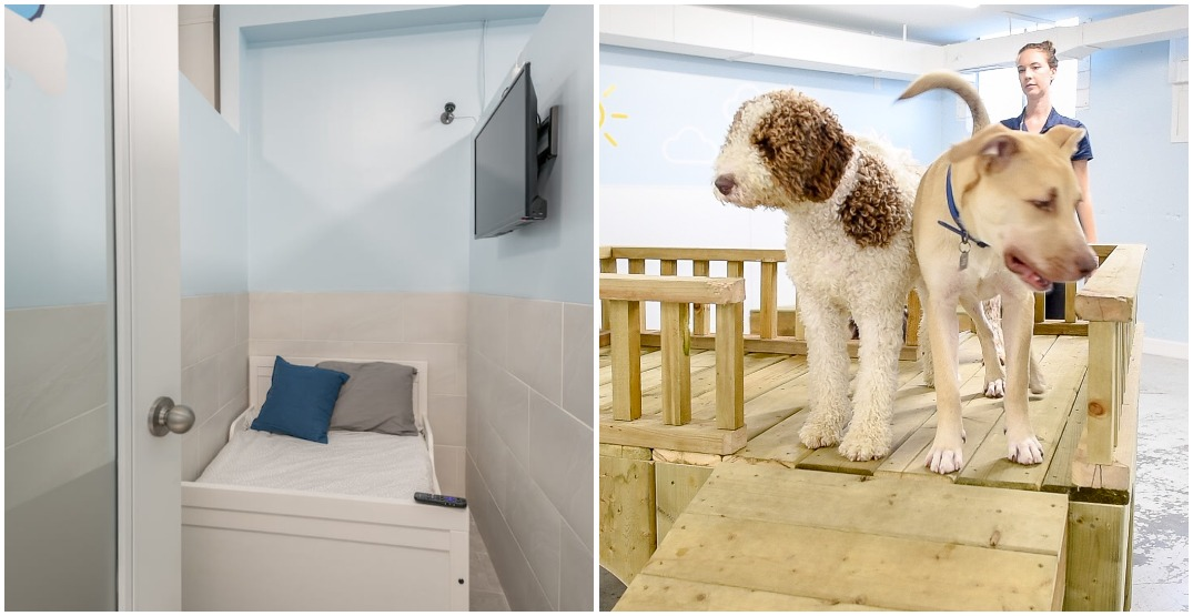 This dog boarding facility has suites that rival 5-star hotels (PHOTOS)