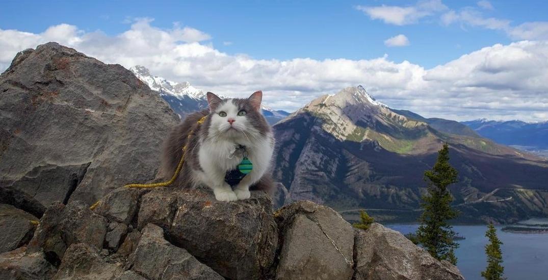 This adventurous Insta famous cat has moved to Edmonton