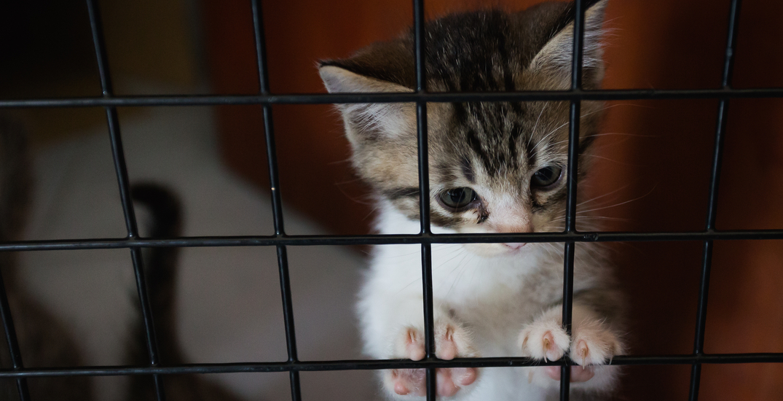 Foster volunteers needed as Lower Mainland animal rescues overrun