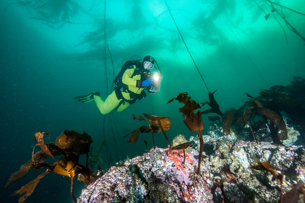 Scuba diving in British Columbia waters