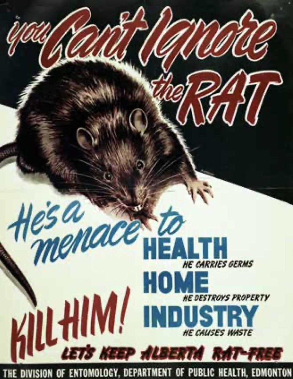 Alberta rats