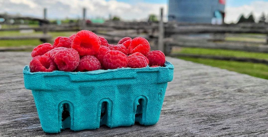 The must-visit farms for raspberry picking near Toronto