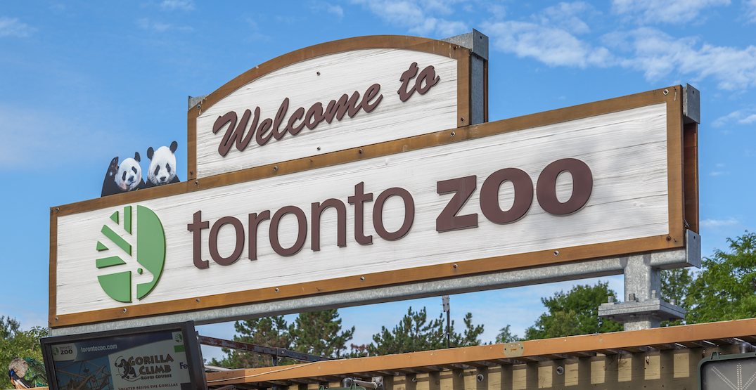 Book a COVID-19 vaccine and get free entry to The Toronto Zoo