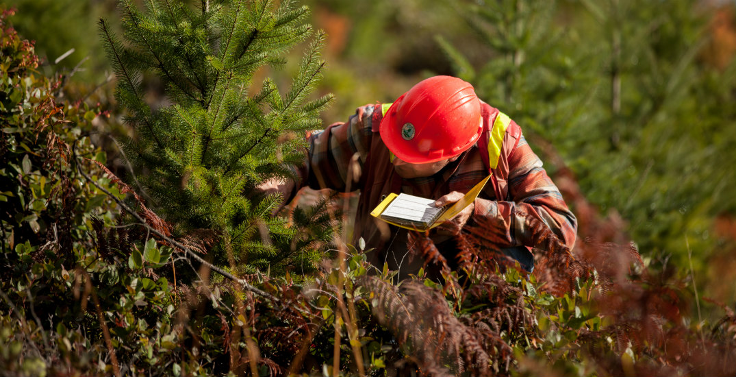 Why professional forestry is a career requiring more than just a passion for the outdoors