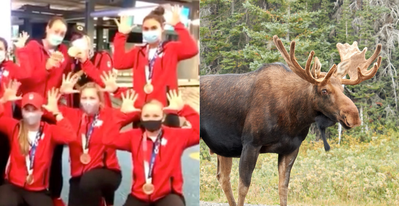 Canada's medal-winning softball team channels inner moose in return home