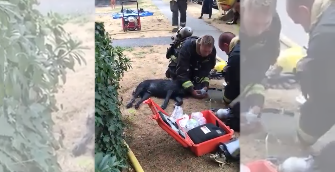Firefighters rescue dog pulled out of fire in South Vancouver (VIDEO)