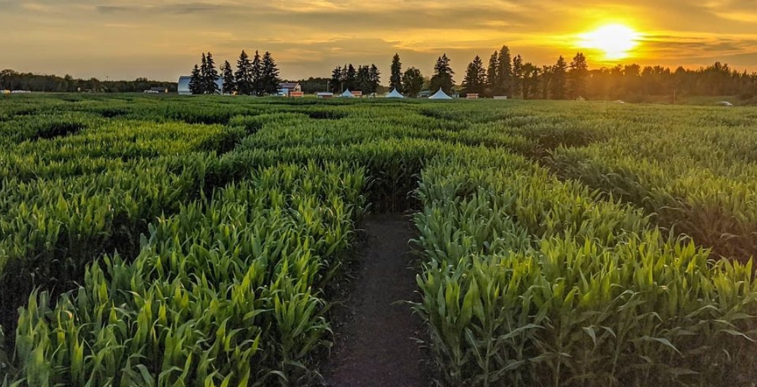 Get lost in the best corn mazes in Alberta you have to visit at least once