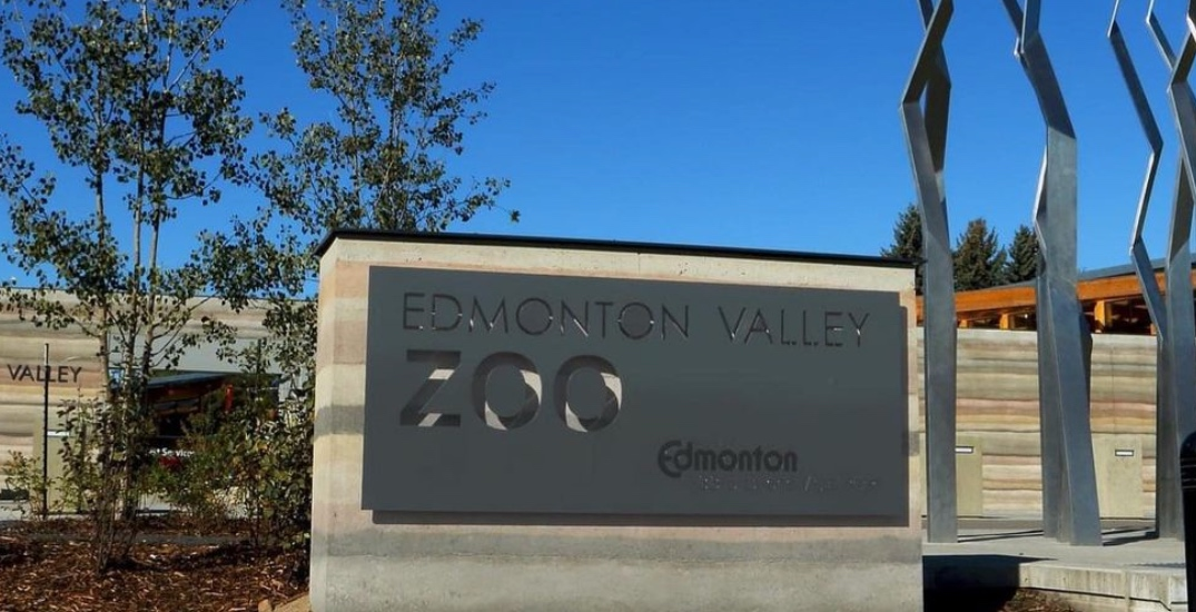 There's a beer carnival at the Edmonton Valley Zoo this weekend