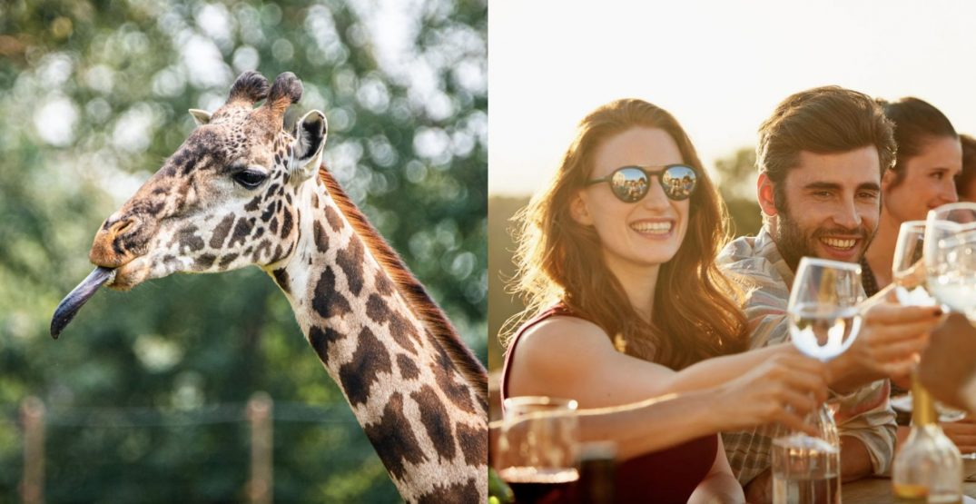 Get the VIP treatment at this fancy adults-only night at the Calgary Zoo