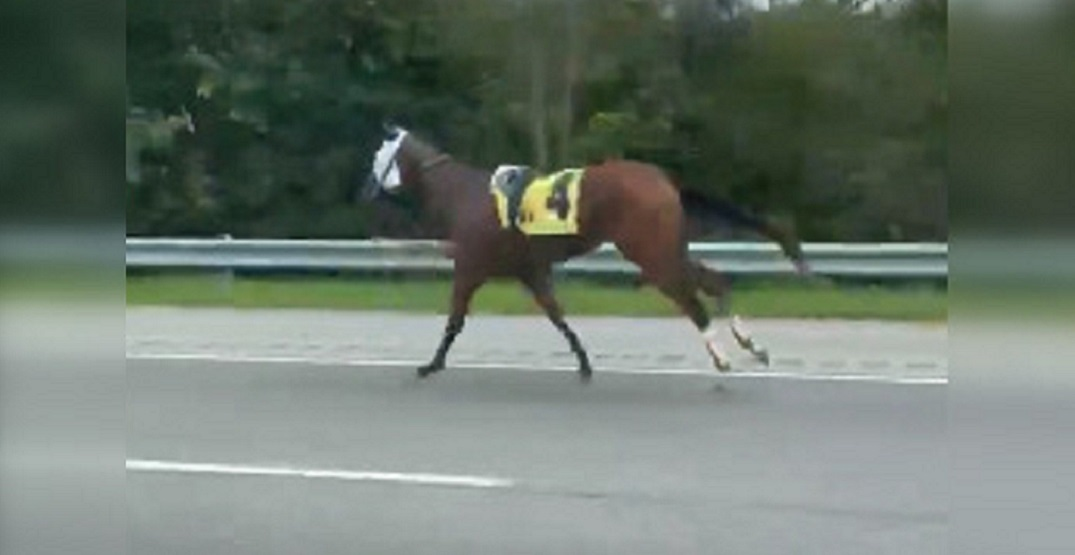 Escaped racehorse takes off down highway without jockey (VIDEO)