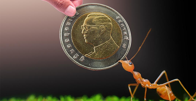 ant corruption