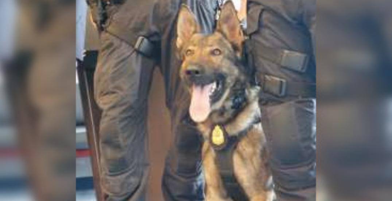 Suspect arrested after allegedly biting Vancouver Police dog