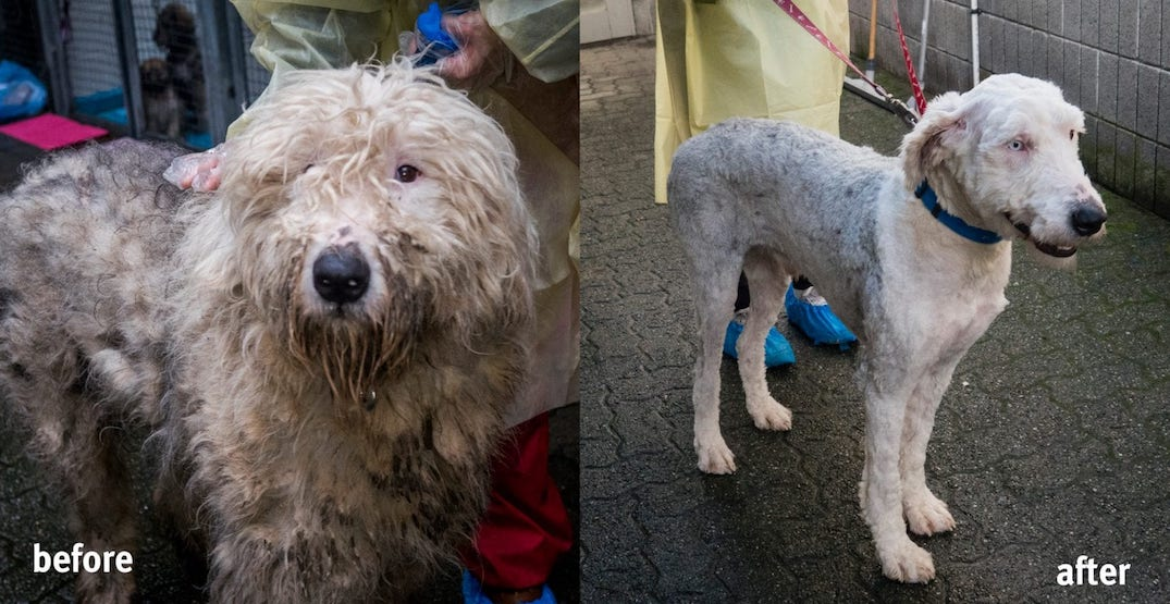 """Duo charged in massive """"Langley 66"""" puppy mill seizures have disappeared"""