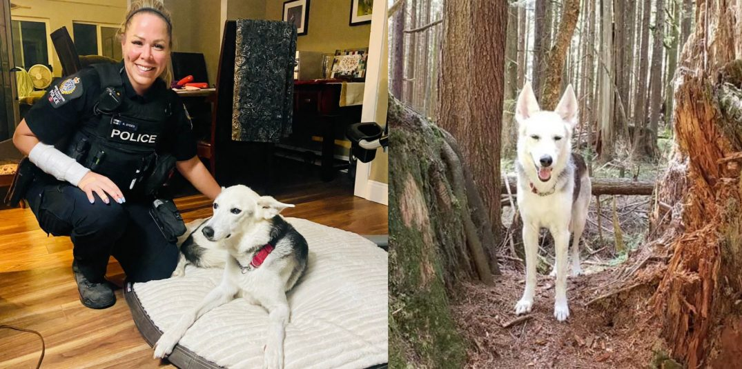 Police reunite family with their dog five days after it was stolen in Coquitlam