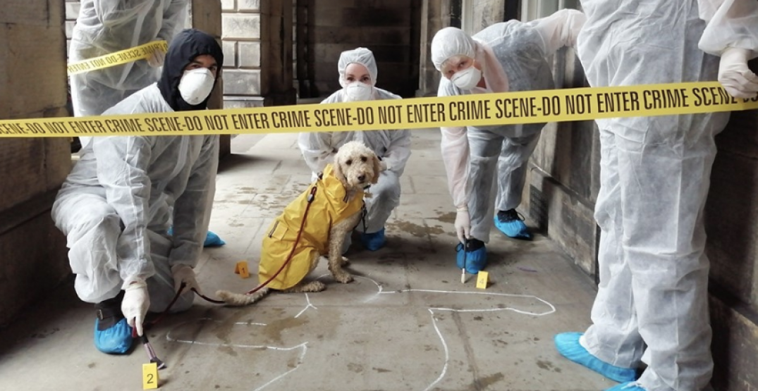 """Solve a murder mystery in this city-wide """"CSI Calgary"""" game next spring"""