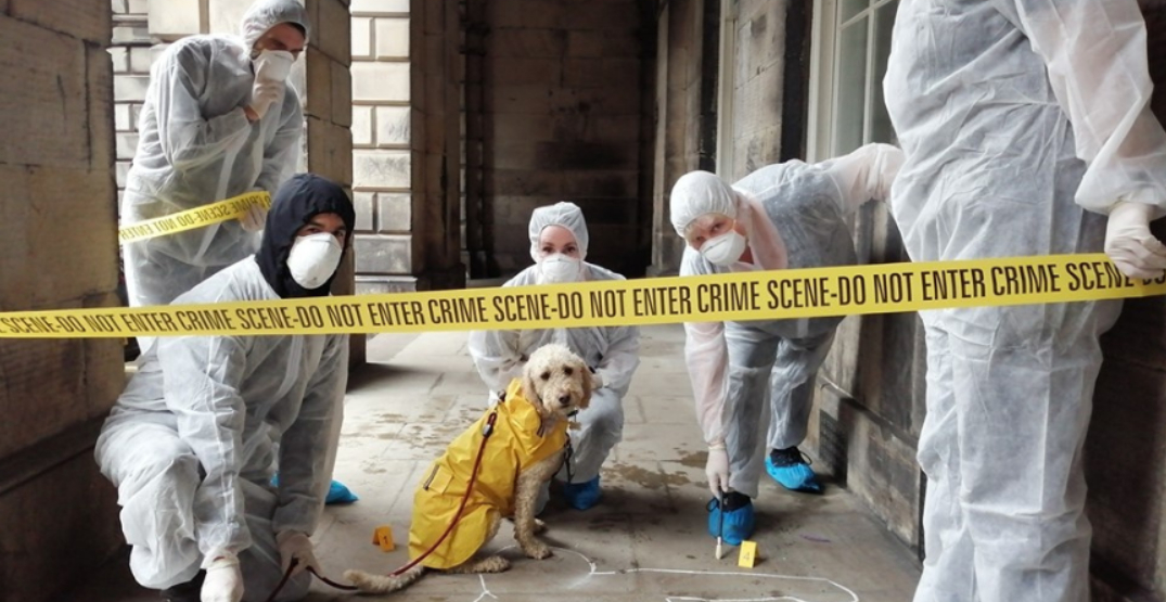 """""""CSI: Montreal"""" lets you live out your dream of being a forensic investigator"""