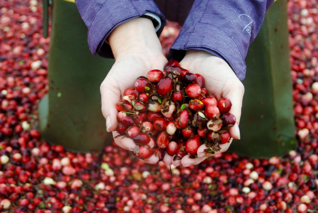 Metro Vancouver's cranberry farm tours have to be on your fall bucket list