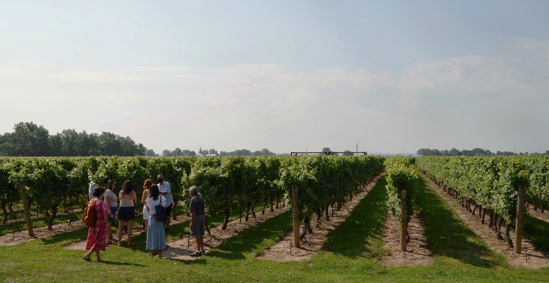 You can hop on the GO to an all-inclusive Niagara wine tasting excursion