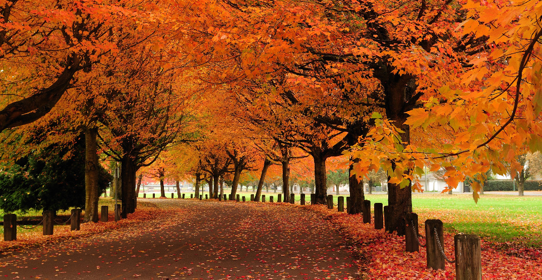 The 10 best places in Vancouver to watch the leaves turn colour this fall
