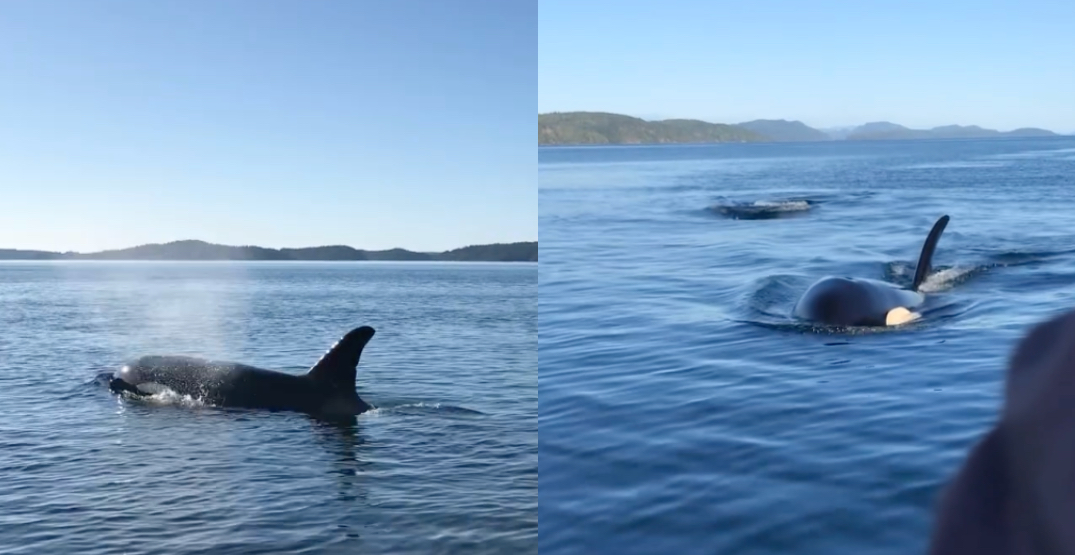 """Watch this """"magical"""" BC orca whale encounter with a tour boat (VIDEO)"""