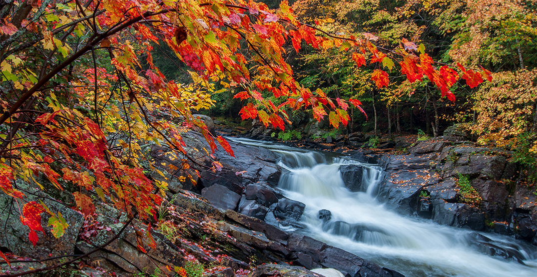 This fall foliage map shows when and where the leaves will peak near you