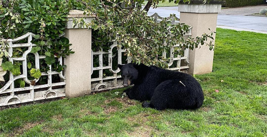 """""""Bears will pay with their lives"""": Non-profit needs help finding people who leave out attractants"""