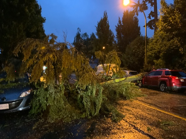 Vancouver storm tree fall