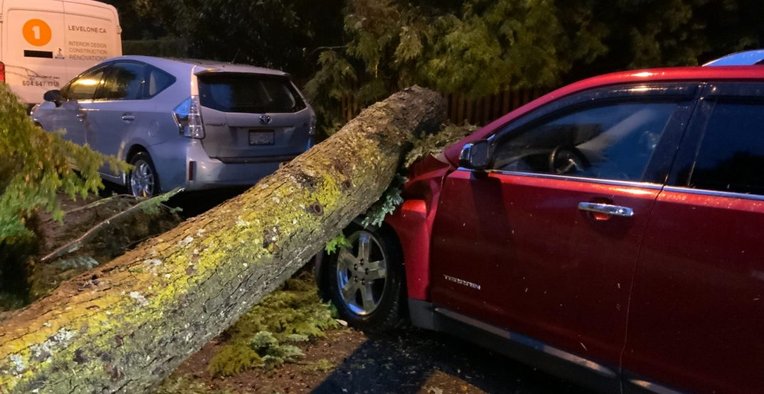 A storm pummelled Vancouver with rain and the wind toppled trees (PHOTOS)
