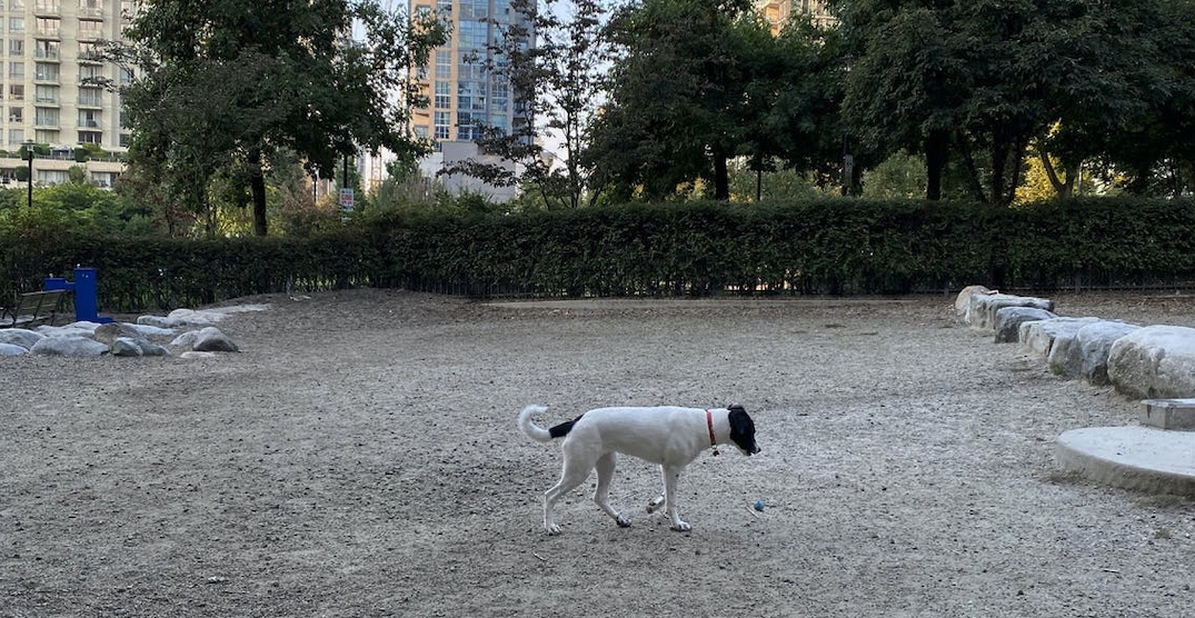 Three new off-leash dog areas proposed for Vancouver parks