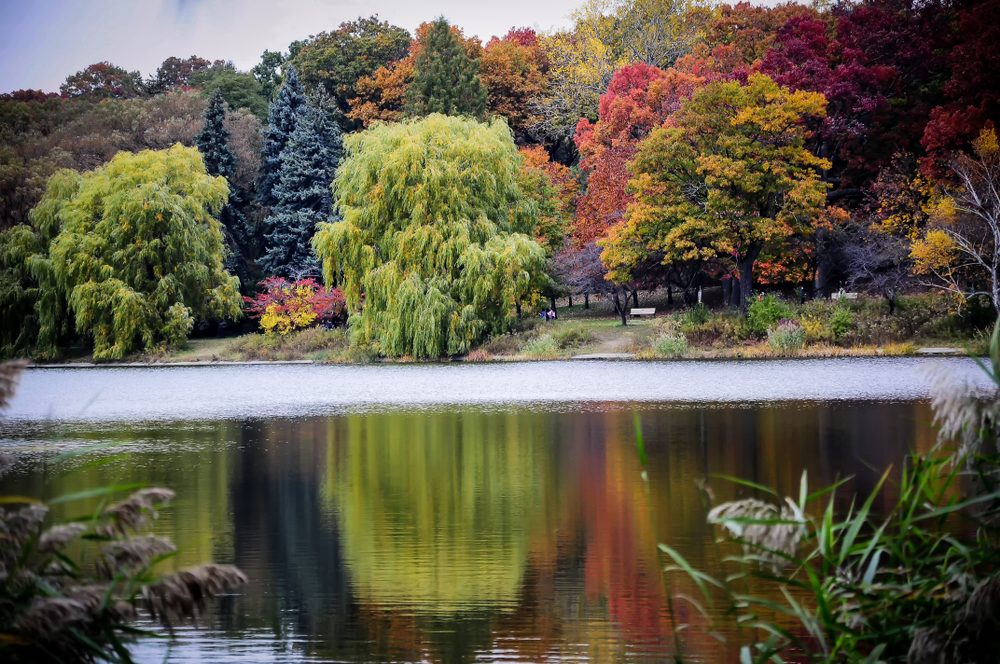 The best places to take in the fall foliage in Toronto