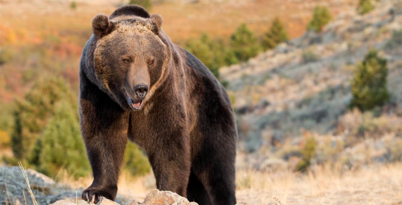 Bear encounter in Alberta Rockies injures hiker, warning issued