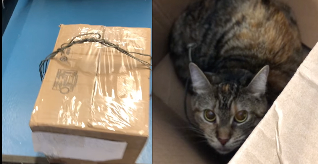 Cat sealed inside box with cord around neck dropped off at Toronto shelter