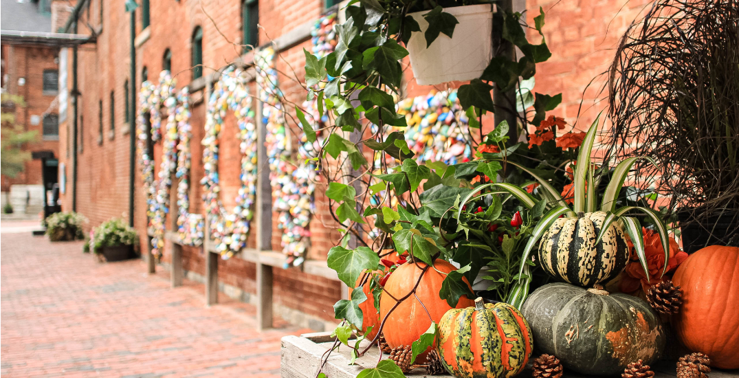 A new fall market is coming to the Distillery District this month