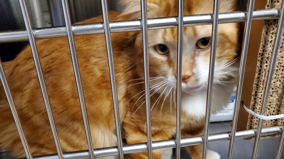 70+ cats and kittens seized from motorhomes near Squamish