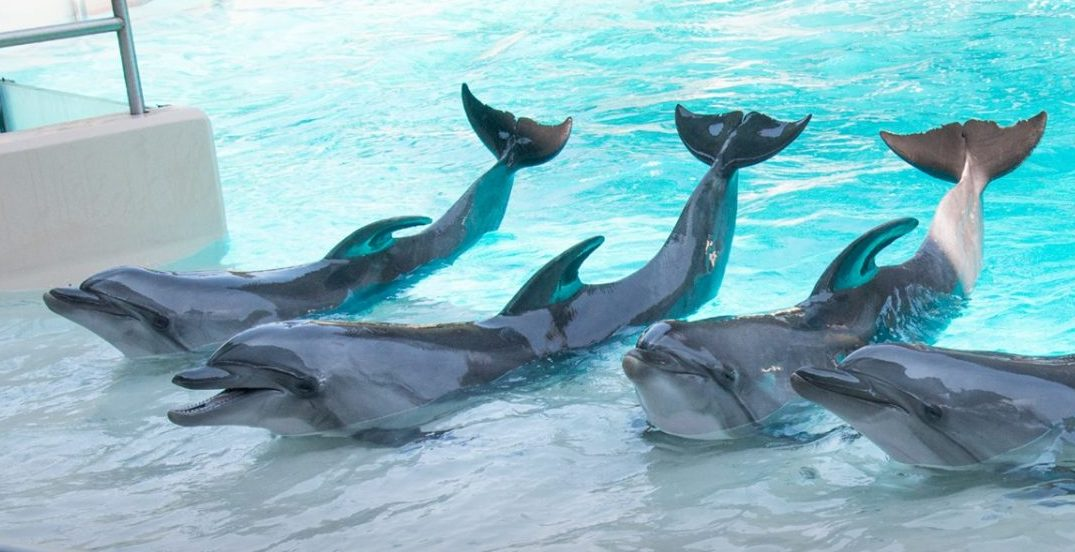 Complaint filed against Marineland over dolphin performances