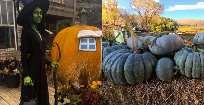 Wander through a haunted farmhouse at a pumpkin festival just outside of Edmonton