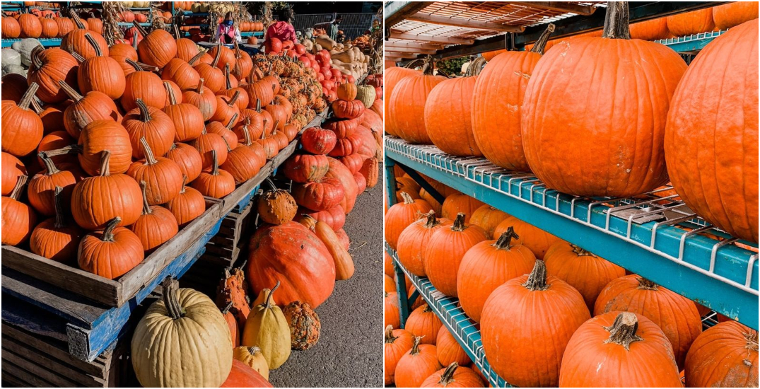 Look at all the pumpkins at Montreal's Atwater Market (PHOTOS)