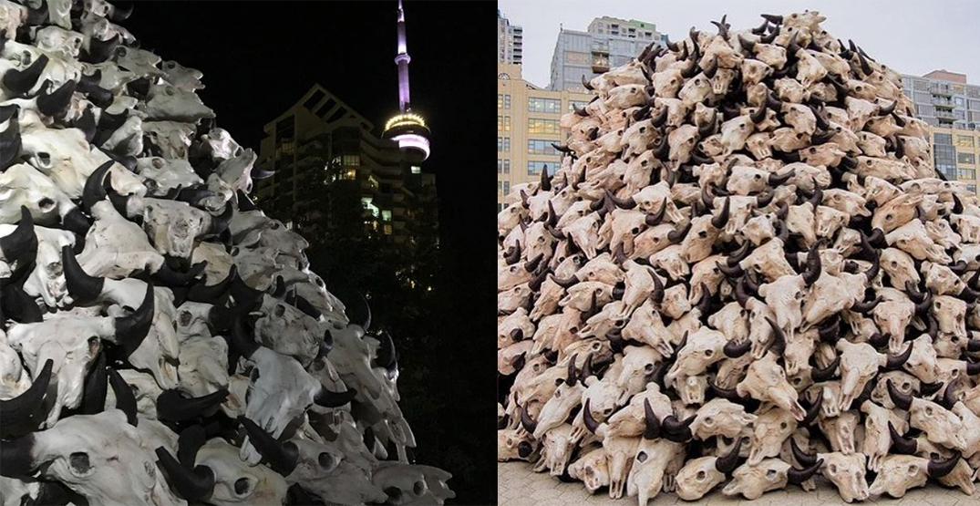 A pile of bison skulls on Toronto's waterfront is a comment on colonialism