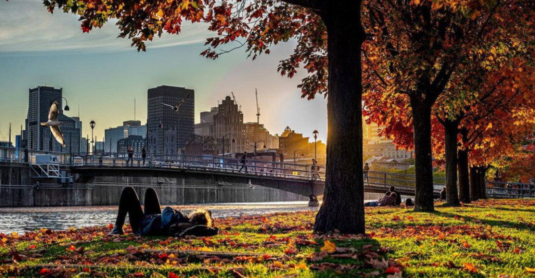 Check out how beautiful the fall foliage is in Montreal right now (PHOTOS)