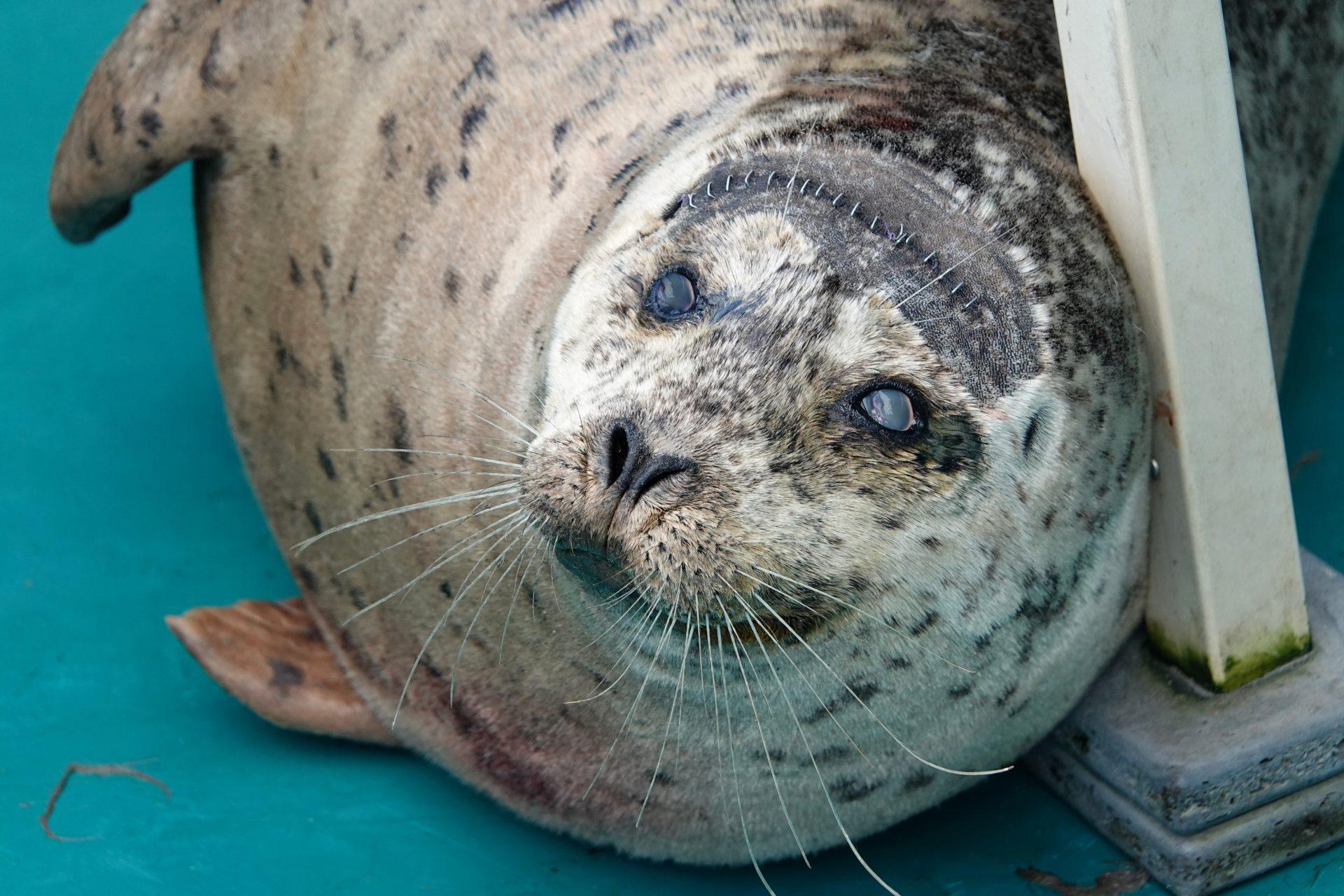aquarium seal
